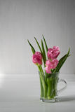 Fresh pink tulip flowers bouquet in a glass jar Royalty Free Stock Photography