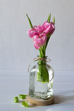 Fresh pink tulip flowers bouquet in a glass jar Stock Photos