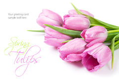 Fresh pink tulip flowers bouquet Stock Image