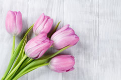 Fresh pink tulip flowers Stock Photography
