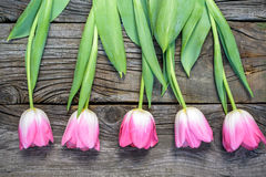 Fresh pink tulip flowers on wooden table. Stock Photos