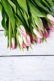 Fresh pink tulips Royalty Free Stock Photo