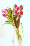 Fresh pink tulips. Pink tulip. Tulips. Flower background. Flowers photo concept. Holidays photo concept Royalty Free Stock Photo
