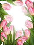 Fresh pink tulips on white background. EPS 10 Royalty Free Stock Photography