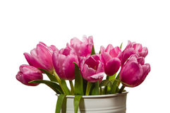 Fresh pink tulips in a white can Royalty Free Stock Photography