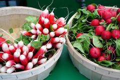 Fresh pink and white radishes at the farmers market. Fresh pink and white radishes in baskets at the farmers market Royalty Free Stock Photography
