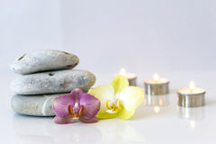 Fresh pink and yellow orchid, near gray stones on a white backgro. Fresh pink and yellow orchid near gray stones on a white background. Concept spa and stock photography