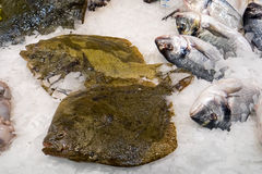 Fresh plaice for sale. Fresh plaice and other fish for sale at a market Stock Images