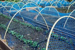 Fresh planings under bird net. Side landscape view of fresh vegetable plants under the protecting bird net Stock Images