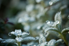 Fresh plant Royalty Free Stock Image