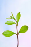 Fresh plant branch Stock Photos