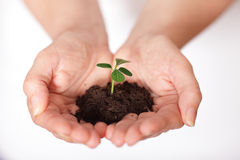 Fresh plant, growing from a small pile of earth Stock Image