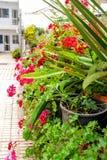 Fresh plants in a greenhouse, digital photo picture as a background. Fresh plants in a greenhouse, beautiful photo digital picture stock photo