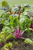 Fresh plants grows in a garden Stock Photos