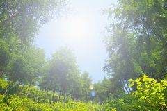Fresh plants and tree Royalty Free Stock Photography