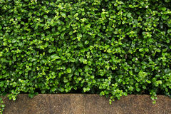 Fresh plants wall for background Stock Photos