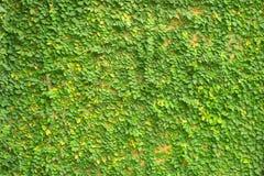 Fresh plants walls in spa Royalty Free Stock Photos