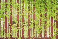Fresh plants walls in spa Royalty Free Stock Photo