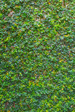 Fresh plants walls in spa for background Stock Photos
