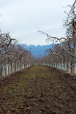 Fresh ploughed apple orchard Royalty Free Stock Photos