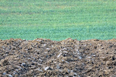 Fresh plowed field with young wheat on a green background Stock Photography