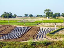 Fresh plowed fields in India Royalty Free Stock Photos