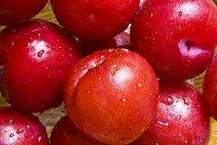 Fresh plums. A close-up of wet red fresh plums Royalty Free Stock Photos