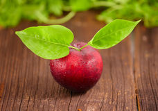 Fresh plum. Fresh wet plum with leaves on wooden board Stock Photos