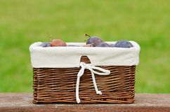 Fresh plum in basket after harvest Royalty Free Stock Photos