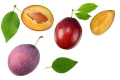Fresh plum fruit with green leaf and cut plum slices isolated on white background. top view stock image