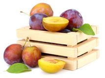 Fresh plum fruit in wooden box isolated on white background stock photography
