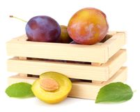 Fresh plum fruit in wooden box isolated on white background royalty free stock photography