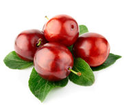 Fresh plum fruits with green leaves Royalty Free Stock Photo