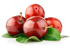 Fresh plum fruits with green leaves Royalty Free Stock Photography