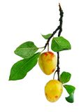 Fresh plum fruits with green leaves Royalty Free Stock Photos