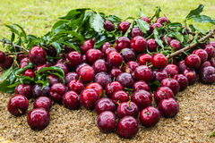 Fresh plum on sand Royalty Free Stock Image