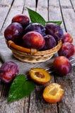 Fresh plum Stock Photography