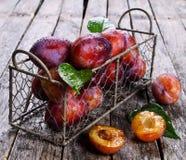 Fresh plum Stock Image