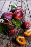 Fresh plum Royalty Free Stock Photography