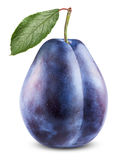 Fresh plum Stock Photography