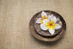Fresh plumeria flower on coconut shell Royalty Free Stock Photos
