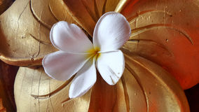 Fresh Plumeria on wooden flower background Stock Photography