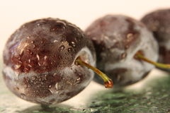 Fresh Plums. Closeup of multiple plums with moisture droplets.  Focus on front plum Royalty Free Stock Photo