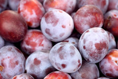 Fresh plums Royalty Free Stock Photos