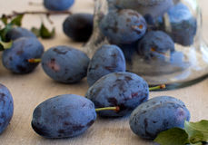 Fresh plums in antique jar. On the table Royalty Free Stock Photo
