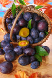 Fresh plums in the basket Stock Images