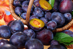 Fresh plums in the basket Royalty Free Stock Photos