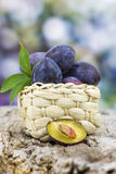 Fresh plums in a basket Stock Photography