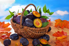 Fresh plums in the basket Stock Image