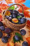Fresh plums in the basket Royalty Free Stock Photo